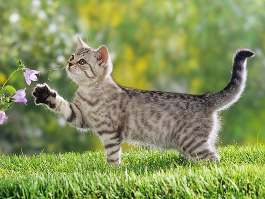 Cute Cat Outdoor, Paw Stretched Out to Reach the Flower, Great Scene