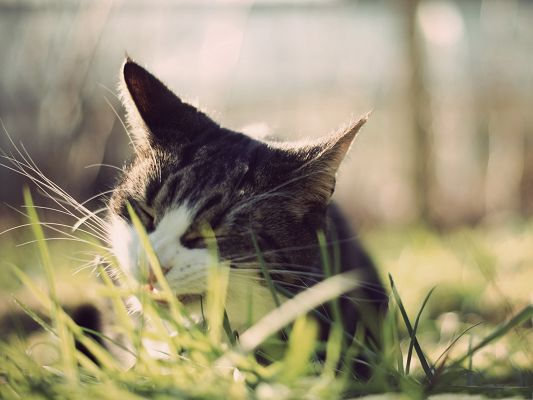 click to free download the wallpaper--Cute Cat Photos, Cat Eating Grass, Hungry to Extremity