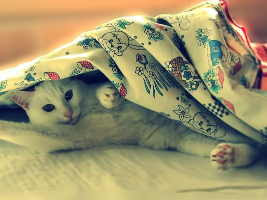 click to free download the wallpaper--Cute Cat Picture, Kitten Hiding Under a Blanket, Morning, Sweetie!