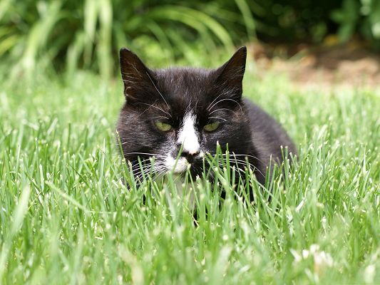 click to free download the wallpaper--Cute Cat Picture, Kitten in Green Grass, Ready to Attack