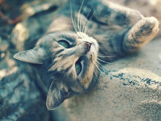 click to free download the wallpaper--Cute Cat Pictures, Cat Lying on Stone, Green Shinning Eyes