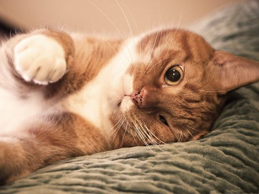 click to free download the wallpaper--Cute Cat Pictures, Ginger Cat, One Closed Eye, Cute Look