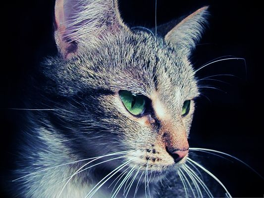 click to free download the wallpaper--Cute Cat Pictures, Kitten in Serious Look, Mysterious and Powerful