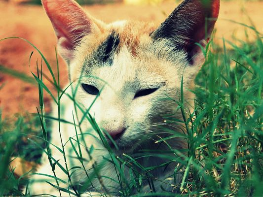 Cute Cat Pictures, White Kitten by Green Grass' Side, Smelling Them