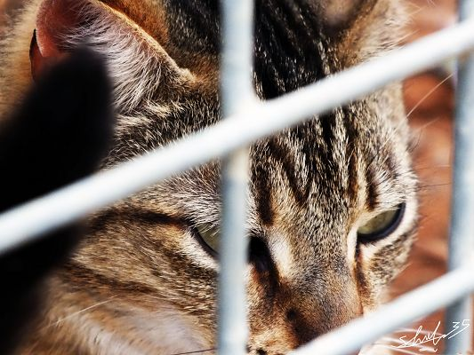 click to free download the wallpaper--Cute Cats Image, Caged Kitten, What Wrong Did You Make?