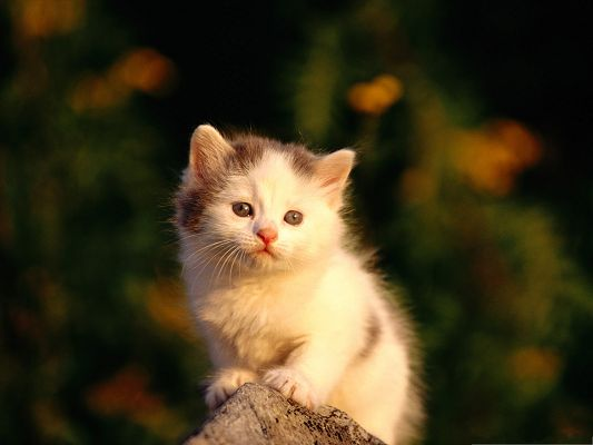 click to free download the wallpaper--Cute Cats Image, Little Kitty in Watering Eyes, Poor and Innocent Look