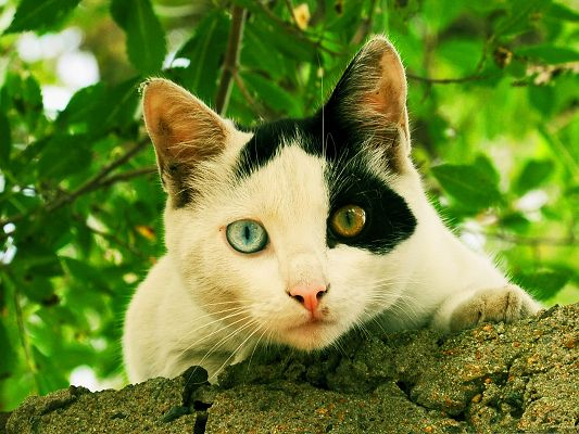 click to free download the wallpaper--Cute Cats Image, Odd-Eyed Cat Under Prosperous Plants