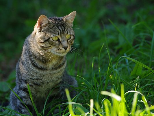 click to free download the wallpaper--Cute Cats Image, Staring Kitten, Stay Outdoor and Among Green Grass