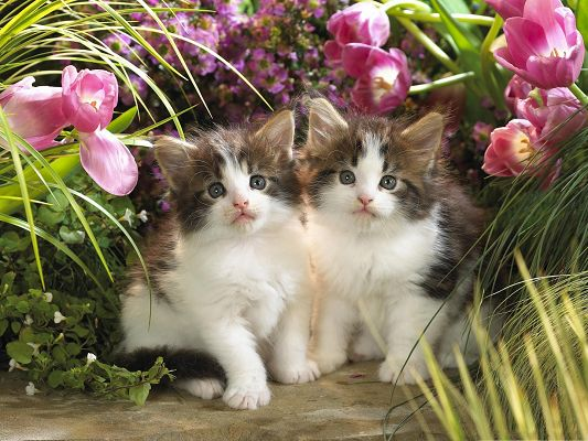 click to free download the wallpaper--Cute Cats Image, Two Kitties Among Purple Flowers, Great Friends