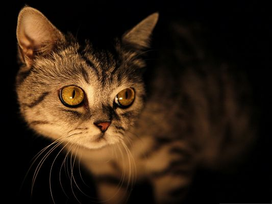 click to free download the wallpaper--Cute Cats Images, Round Face and Wide Open Eyes, What a Cutie!