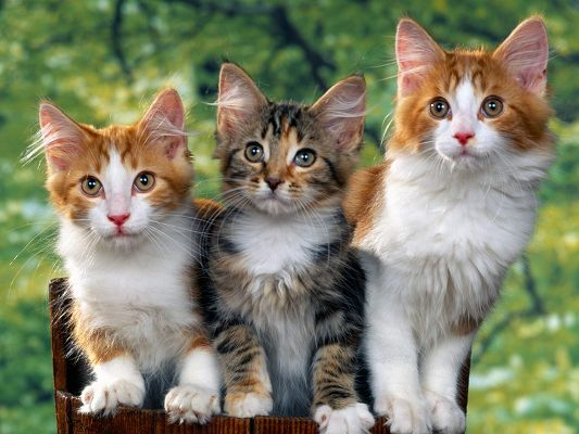 Cute Cats Photo, Three Cats Together, All Looking at a Certain Object
