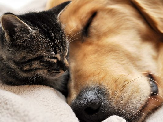 Cute Cats Photography, Sleeping Kitten and Puppy, Close to Each Other