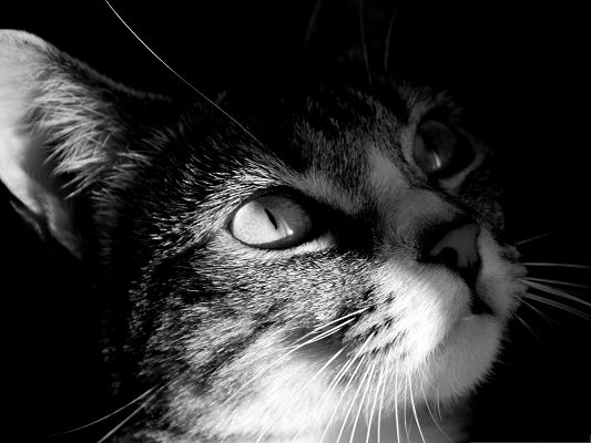 click to free download the wallpaper--Cute Cats Picture, Black And White Kitten, Light Pouring in