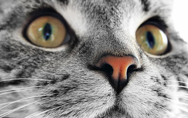 click to free download the wallpaper--Cute Cats Picture, Kitten's Face Portrait, It Stay Focused