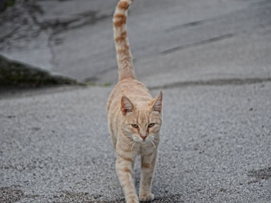 click to free download the wallpaper--Cute Cats Picture, Lonely Kitten Walking on the Road, No Facial Expression