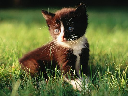 click to free download the wallpaper--Cute Kitten Images, Black Little Cutie Among Green Grass, Sweetie, Are You Losing Your Way?