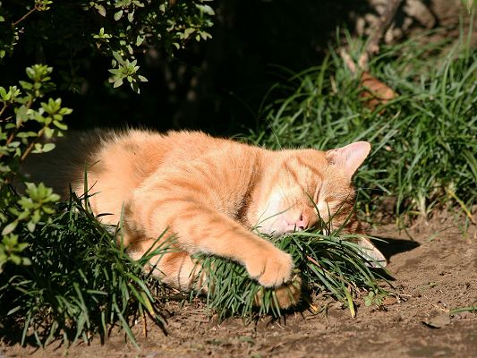 click to free download the wallpaper--Cute Kittens Pic, Homeless Cat in the City, Taking Green Grass in the Arms