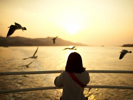 Cute Young Girl, Little Girl Watching the Sunset, a Group of Flying Birds
