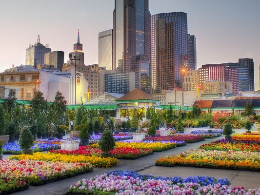 click to free download the wallpaper--Dallas Downtown Picture, Colorful Blooming Flowers, Tall Buildings Around