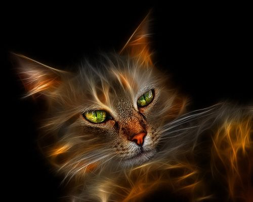click to free download the wallpaper--Desktop Gallery Windows Cat in 1280x1024 Pixel, Cat is Crystal Clear and Can Disappear at Any Time, Looking Fantastic - HD Creative Wallpaper