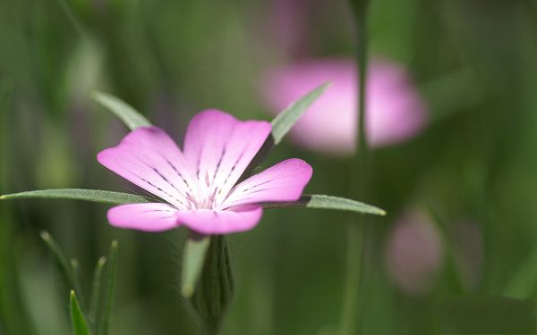 click to free download the wallpaper--Digital Flower Phorography, Little Pink Flowers Weakening Up, Smile to Bloom