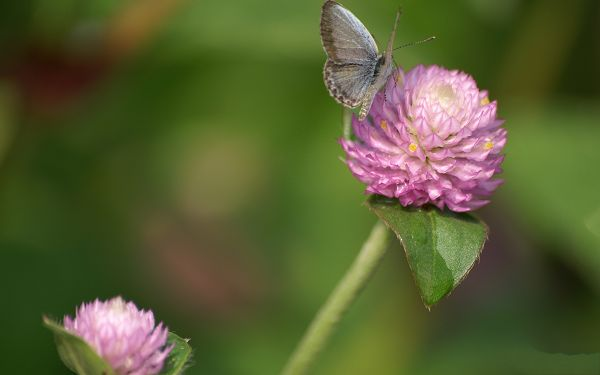 Digital Flower Photo, Blooming Flowers and Butterfly, Great Lovers