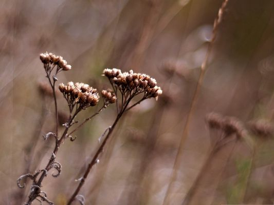click to free download the wallpaper--Dry Wild Flowers, Beautiful Flowers in Autumn, Dry and Fading