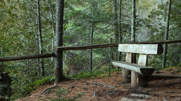 Enjoyable Natural Sceneries - A Wooden Chair Among the Green Scene, Sit Down and Enjoy!