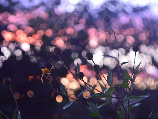 click to free download the wallpaper--Evening Flowers Image, Beautiful Flower in Bud, Great Dusk Scene