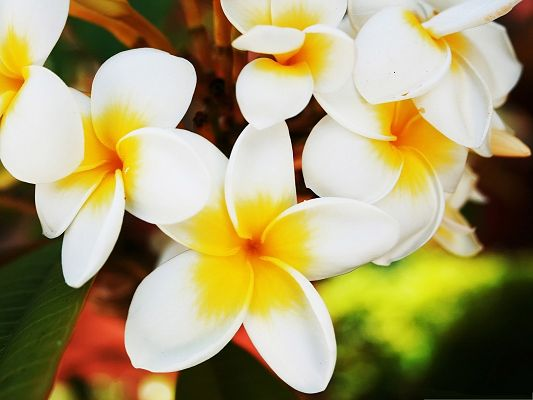 click to free download the wallpaper--Exotic Flowers Photo, White and Tiny Flowers, Pure and Great Love