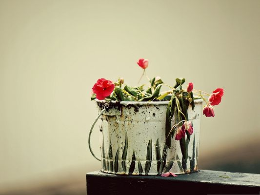click to free download the wallpaper--Fading Flower Picture, Roses Lowering Down, Fading and Unproud