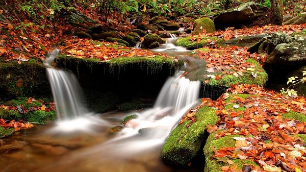 Fallen Maple Leaves and Clear River, Stones Covered with Moss, What a Wonderful Scene! - HD Natural Scenery Wallpaper