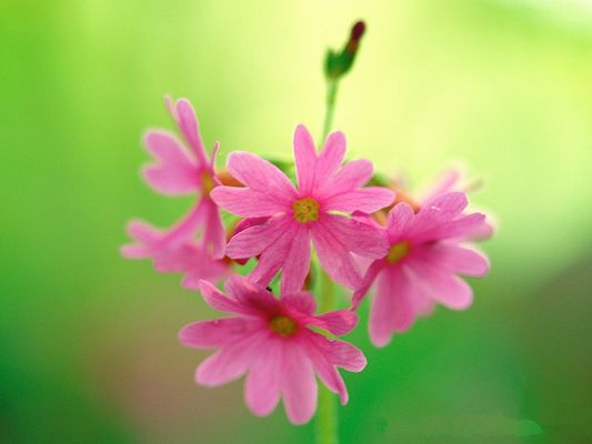 click to free download the wallpaper--Fine Art Landscape Photography, Pink Blooming Flowers and Green Leaves