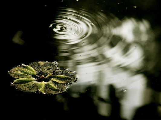 click to free download the wallpaper--Floating Flower Picture, Beautiful Flower on Water, Ripples Around