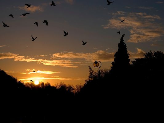 click to free download the wallpaper--Flock of Birds, Black FLying Birds, the Setting Sun, Incredible Scenery