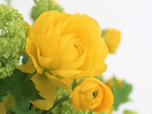 click to free download the wallpaper--Floral Art Design, Yellow Blooming Flowers, Cozy Scene