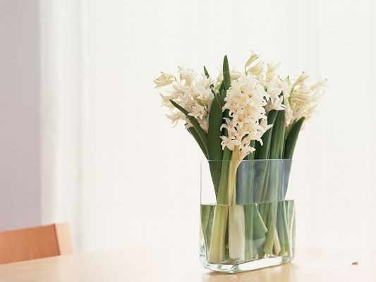 click to free download the wallpaper--Floral Art, White Blooming Flowers in Glass, Prosperous Growth