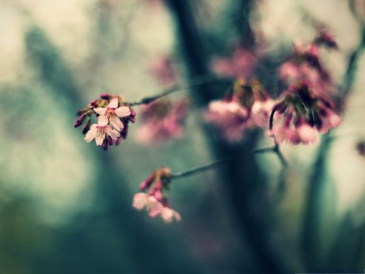 click to free download the wallpaper--Floral Nature Landscape, Pink Blooming Flowers on Fuzzy Background