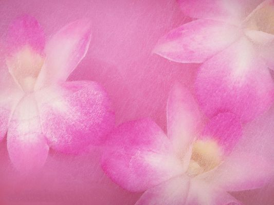 click to free download the wallpaper--Flower Art Image, Pink to White Flowers, All Bloom to Attract Much Attention