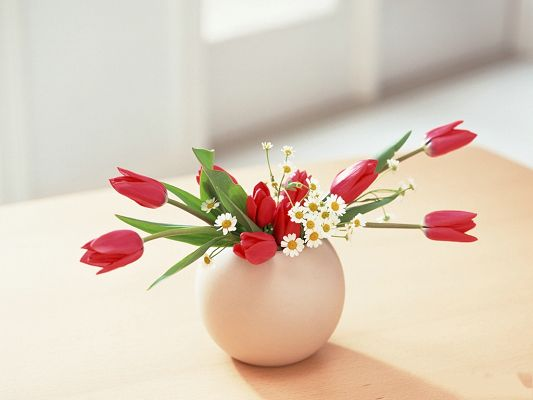 click to free download the wallpaper--Flower Art Photography, Red and White Flowers in Egg Pot, Inside the Room