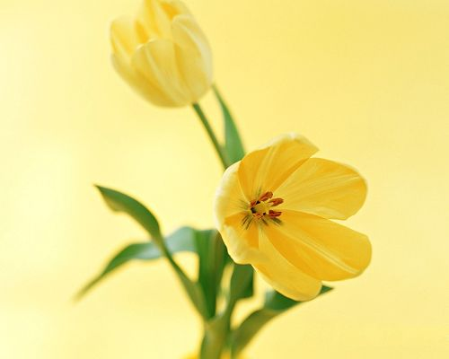 click to free download the wallpaper--Flower Art Photography, Yellow Blooming Flowers and Green Leaves, Incredible Look
