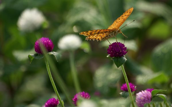 click to free download the wallpaper--Flower Art Photos, Butterfly on Purple Blooming Flowers, Incredible Scene
