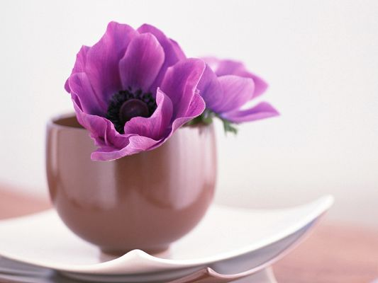 click to free download the wallpaper--Flower Art Picture, Purple Flowers in Bloom, Brown Pot