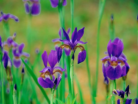 Flower Digital Photography, Dark Purple Flowers and Green Grass, Incredible Look