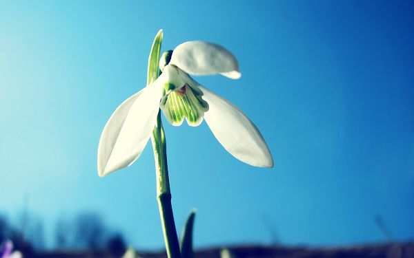 Flower Has Just Awaken, Sky is Cloudless and Blue, Symbolizing a Whole New Life - HD Photography Wallpaper