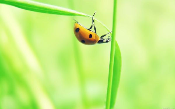 click to free download the wallpaper--Flower Photography, Little Insect on Green Grass, Great Morning Scene