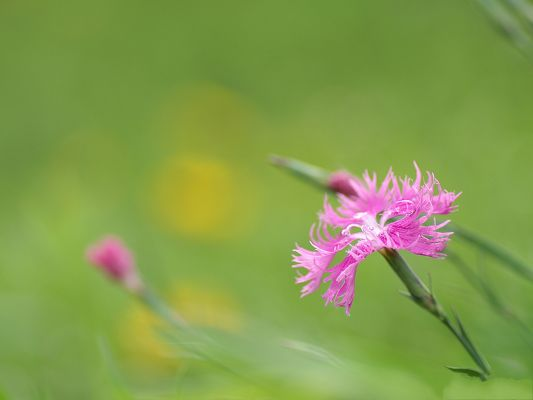 click to free download the wallpaper--Flower Photograpy, Pink Flower on Green Background, What a Contrast!