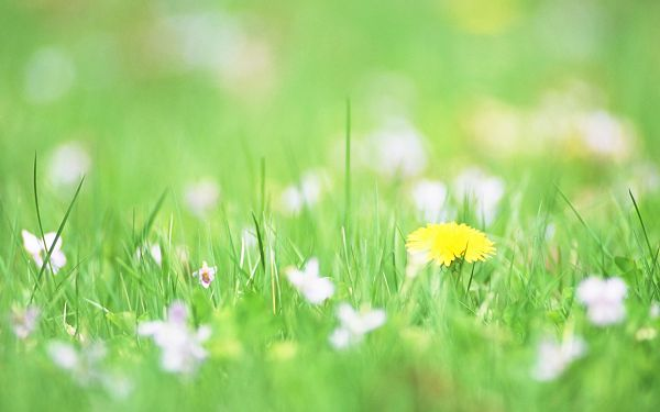 click to free download the wallpaper--Flower Photos, Yellow and White Flowers in Soft Effect, Sweet Scene