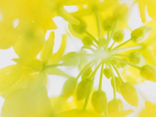 click to free download the wallpaper--Flower Picture Art, Yellow Flowers Under the Blue Sky, Incredible Scene