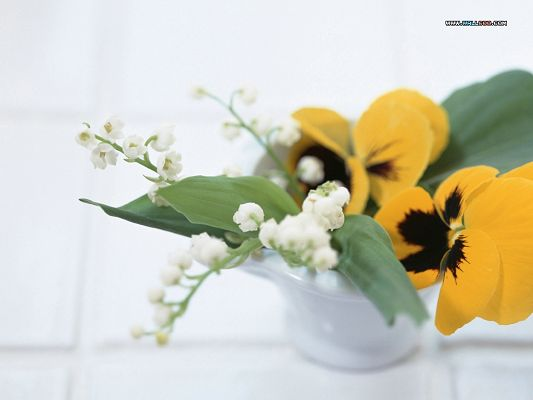 click to free download the wallpaper--Flower Picture Art, Yellow and White Flowers, Petals Fully Stretched